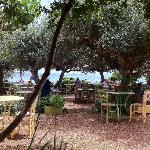  The taverna in the olive grove