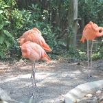  Flamingos resting