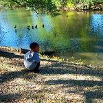 My youngest watching the ducks