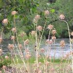 RIVER SIDE WEEDS 01