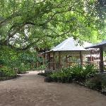 Foto de The Mangrove Garden Restaurant & Accommodation