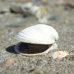 local shell at the beach