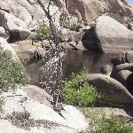 Joshua Tree/ Bakers Dam