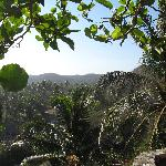  Jungle view from Loma Linda