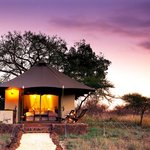 ‪White Elephant Safari Lodge‬