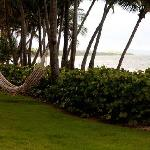  Hammock overlooking the water