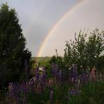 Rainbow and Lupines across the street