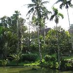 The pond with palm trees and the cottages in the background
