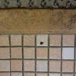  Dead bug on bathroom floor at arrival in unclean bathroom.