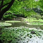 Koishikawa Korakuen Garden