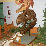 Dinosaur Discovery Museum