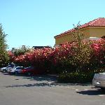Courtyard by Marriott Bakersfield - car park surrounded by flowers