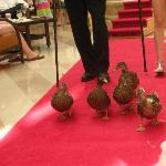Peabody Ducks marching the red carpet!