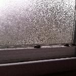  Windowsill Bugs