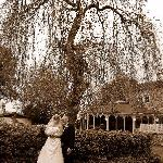  The weeping willow at the front of the hotel.