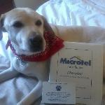 Foto de Microtel Inn & Suites by Wyndha