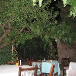 Grapes growing in the courtyard