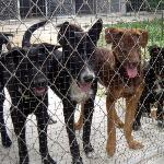 Lanta Animal Welfare Foto
