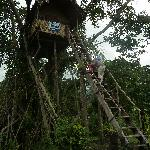  Nauhiu Banyan Treehouse