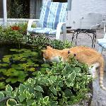  local cat watching the fish in the back yard!