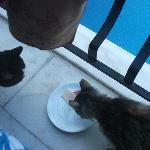 Skanky Mankey and Fluffy Wuffy who joined us for breakfast each morning
