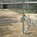 Tregembo Animal Park