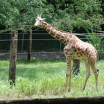 Mayaguez Zoo