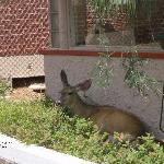 Even the Deer feel at home herre!!!!