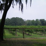 Irvin House Vineyards