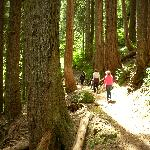 Trails near Sol Duc Resort