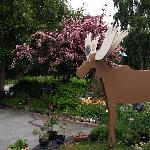 Parking, gardens, and our Moose