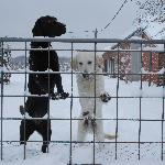Vinkenbos - Our Dogs in Winter Time