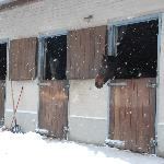 Vinkenbos - Our Horses in the Snow