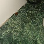 BUGS! Roaches and Centipeds and silverfish in sinks, bathroom and floor