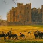 Deer at Raby Castle