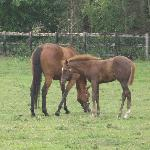 mm and foal