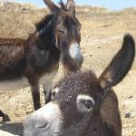 Ririka and Markos, Ethaleia's two lovely donkeys