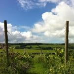 Foto de The Purbeck Vineyard