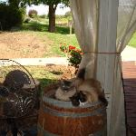  cats relaxing as well