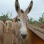 Donkey Sanctuary Bonaire