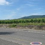  Wine Route of Alsace