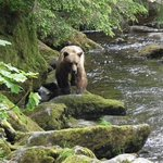 Anan Creek Bear Observatory