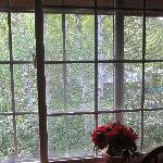  Room window facing the deep woods