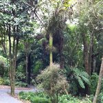 Otari - Wilton's Bush Native Botanic Garden
