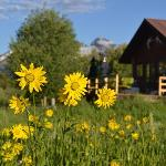 Wildflowers and West Cabin