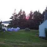 Photo of Trailing Yew Monhegan