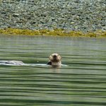 A Sea otter watched us for a while.