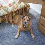 Bailey relaxing in the room
