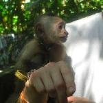 Holding a baby monkey