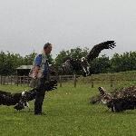 the vulture show